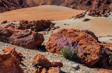 Volcanic Landscape in Tenerife
