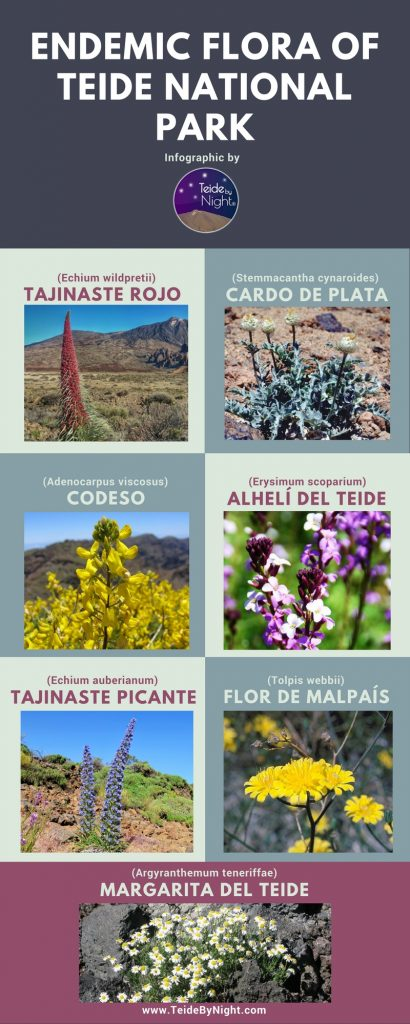 Infographic by Teide By Night guided tour